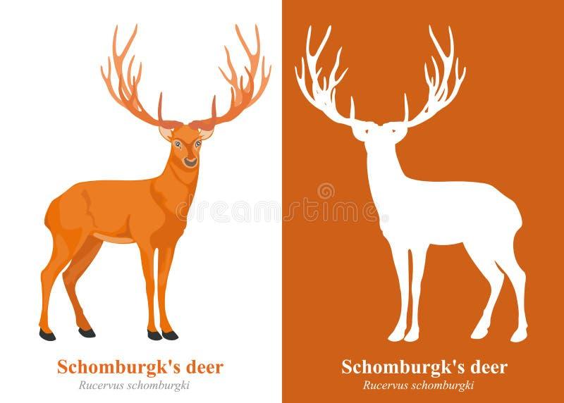 Schomburgks Rotwild lizenzfreie stockbilder