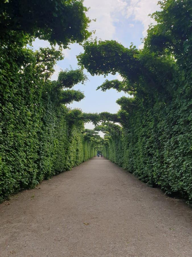 schonbrunn de jardin image stock