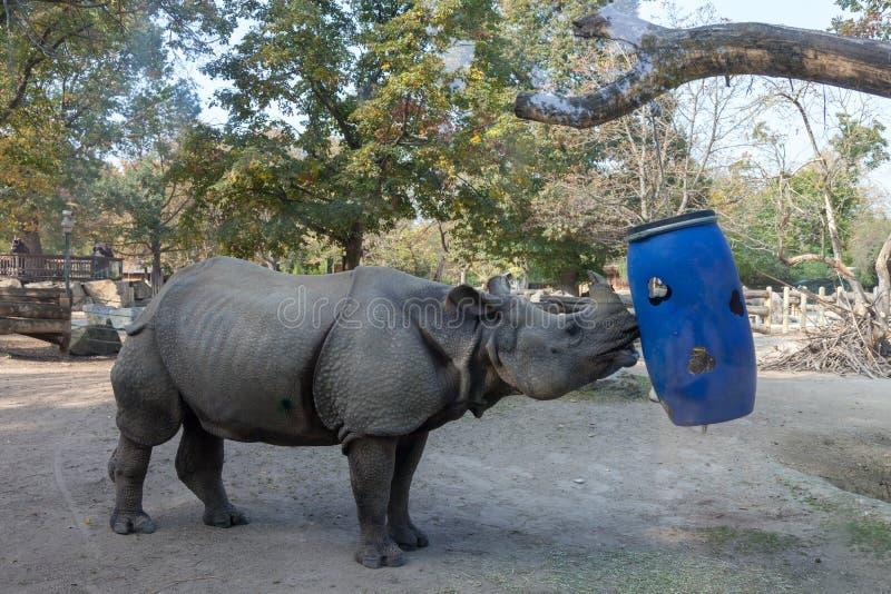 Schonbrunn-Zoo rhinoceros lizenzfreie stockfotografie