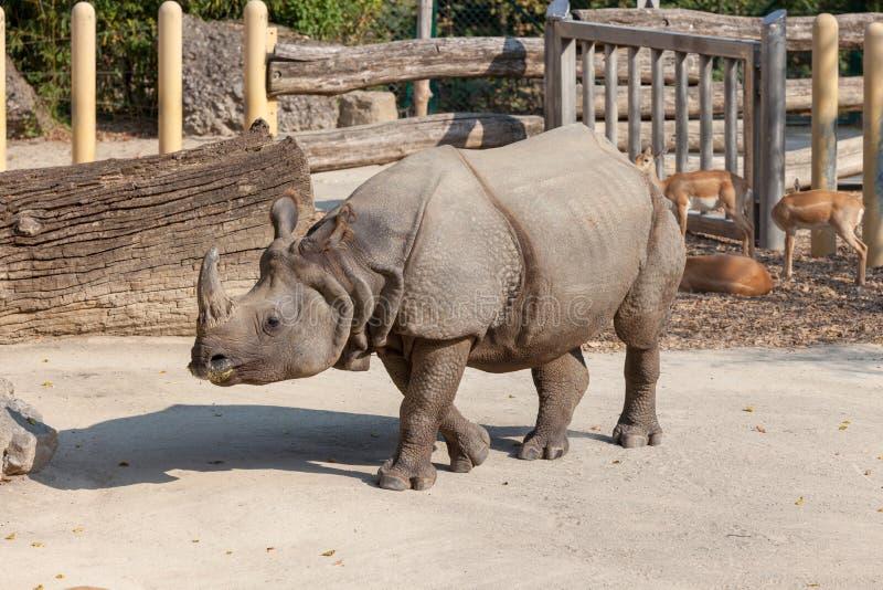 Schonbrunn-Zoo rhinoceros lizenzfreies stockfoto
