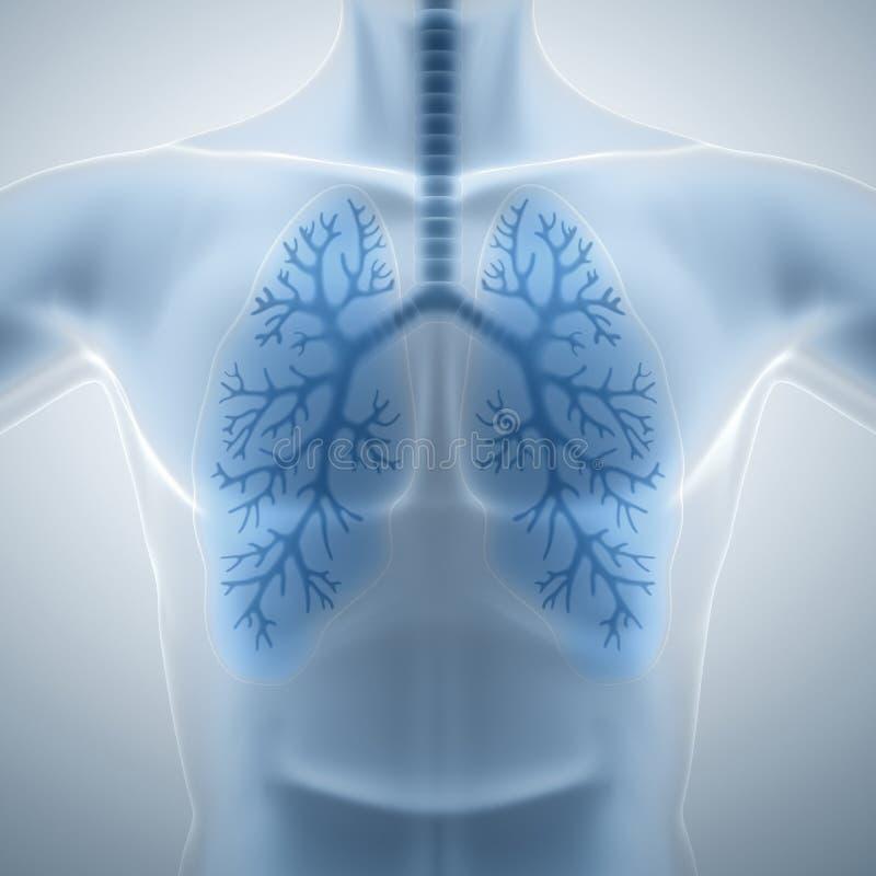 Schone en gezonde longen stock illustratie