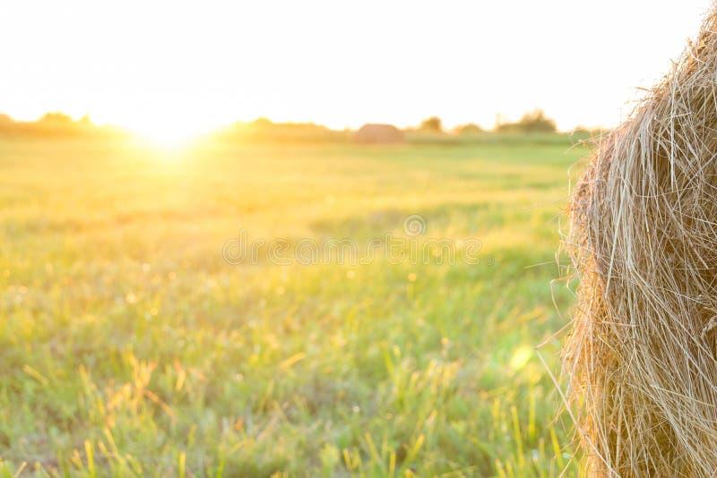 Schoof van hooi op het gebied bij zonsondergang stock foto's