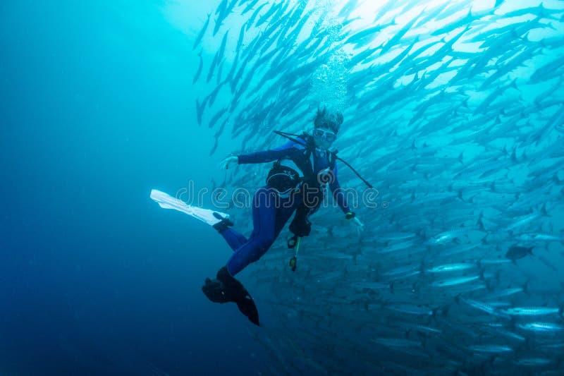 Download School of barracuda stock image. Image of dive, beauty - 28105673
