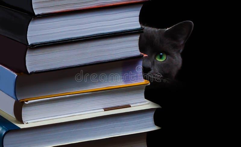 School books on desk, education concept, educate, technology, cat, splash. Business laptop computer royalty free stock photography