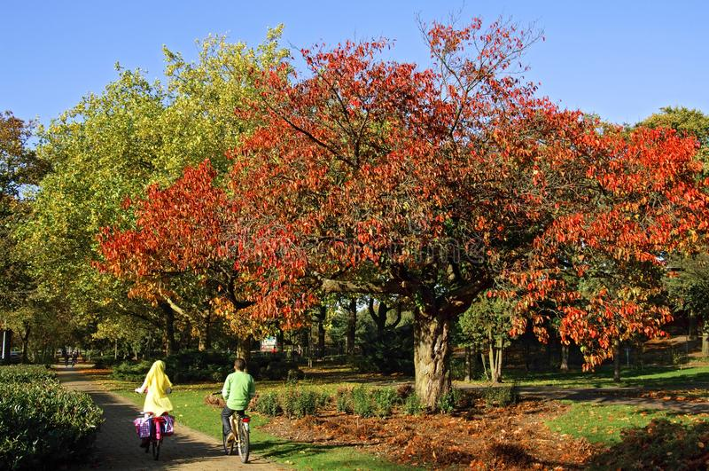 School children cycling in colorful autumn landscape stock image