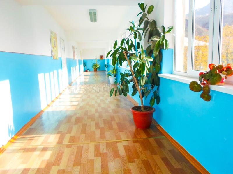 School corridor with flowers and posters on the wall. Long corridor with large windows stock photos