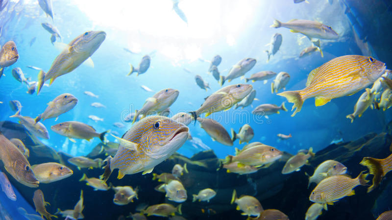 Download School of Fish stock image. Image of beauty, tropical - 22953451