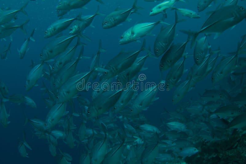 Download School of fish stock photo. Image of water, school, fish - 23559558