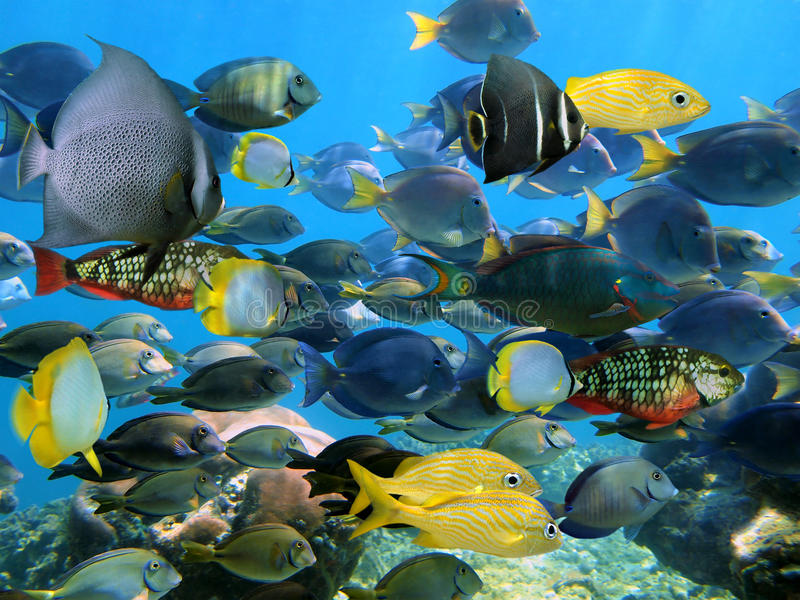 School of fish stock image