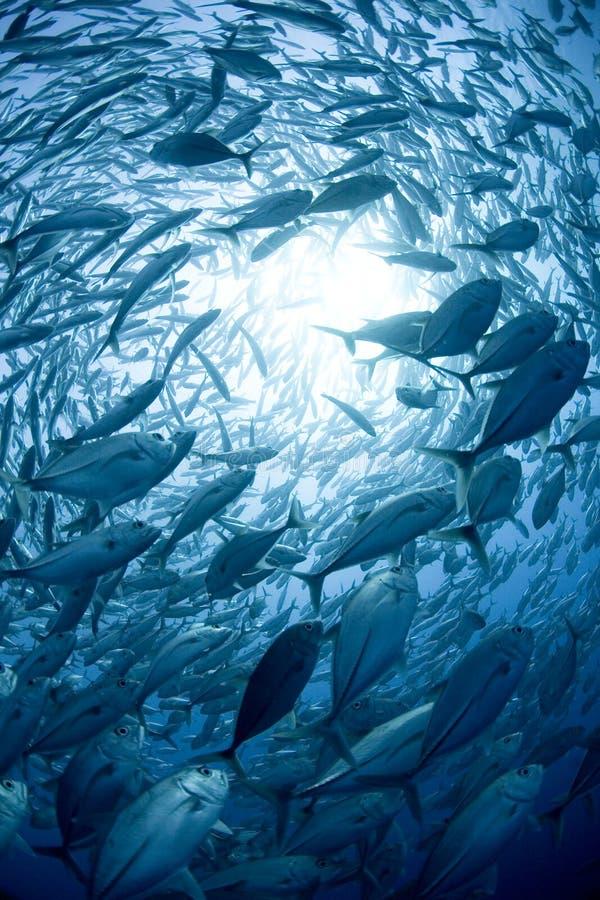 Download School of fish stock image. Image of aquatic, circles - 3018627
