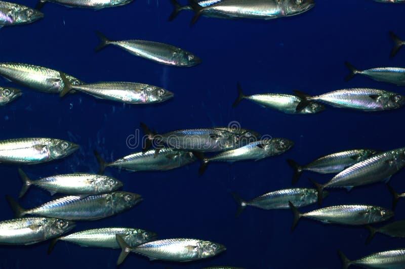 Download School of Fish stock photo. Image of tank, life, salt, education - 603754
