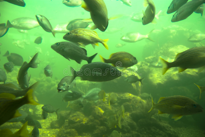 Download School of fish stock image. Image of coral, life, under - 8846851