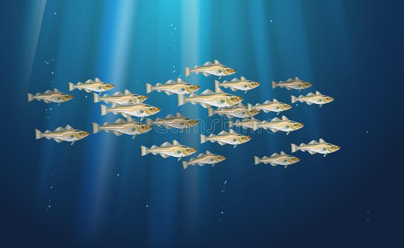 School of fish Codfish. Marine life. Cod atlantic, vector illustration with details and optimized specks to be used in packaging. Design, decoration vector illustration