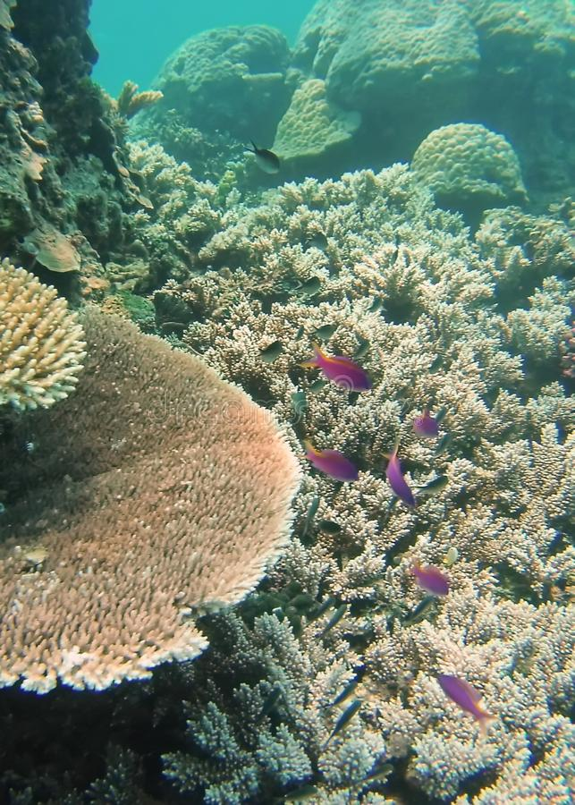 School of fish on the Great Barrier Reef stock photography