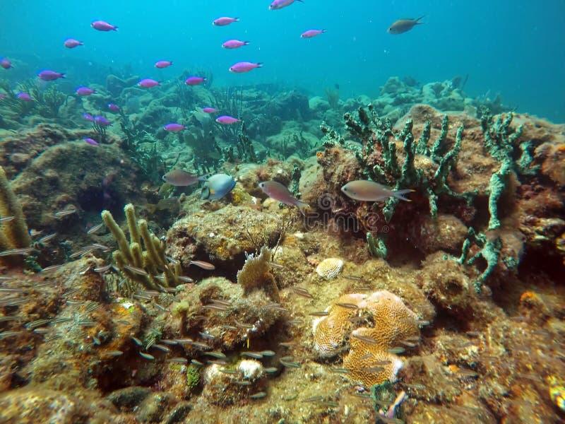 School of fish off Pompano Beach stock photo