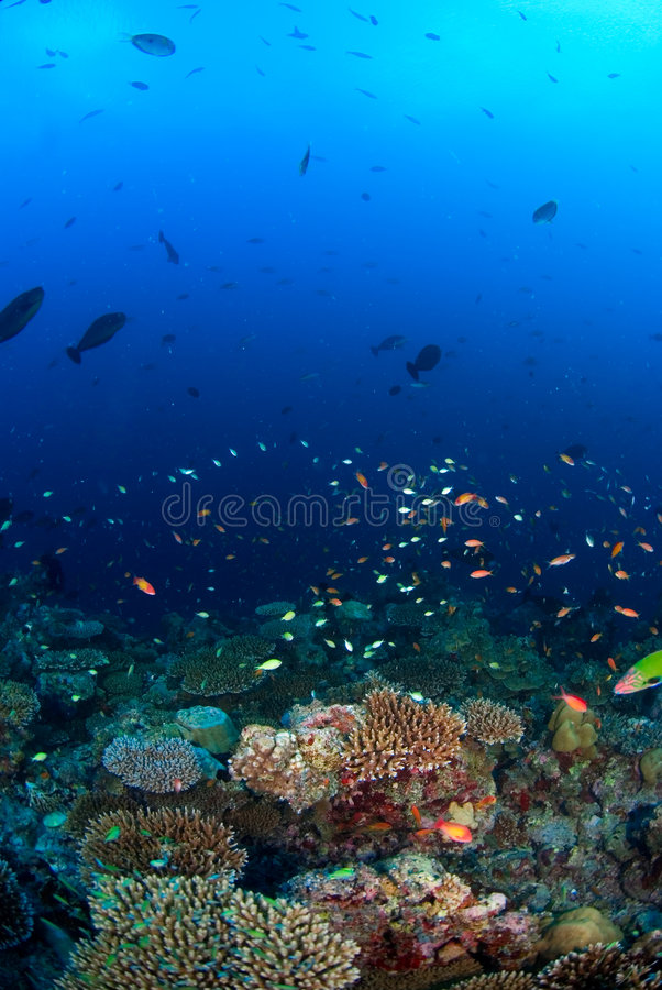 School of fish over coral reef. With sun at the surface