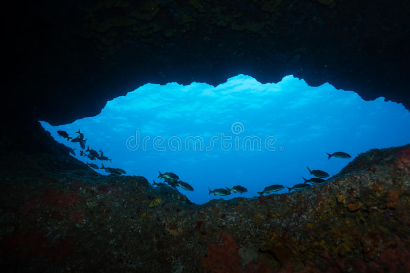 School of fish silhouetted against blue sunlit water of underwater cave entrance royalty free stock photo