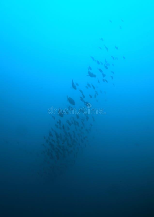 School of fish royalty free stock image