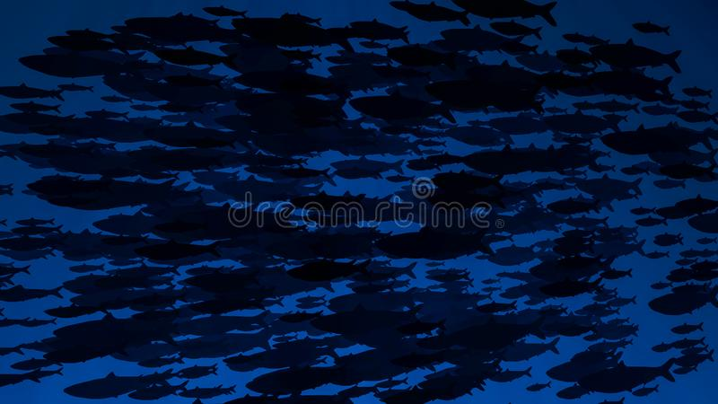 School of fish swims past camera. Silhouettes. Sun shine beams and rays on sea floor underwater stock image