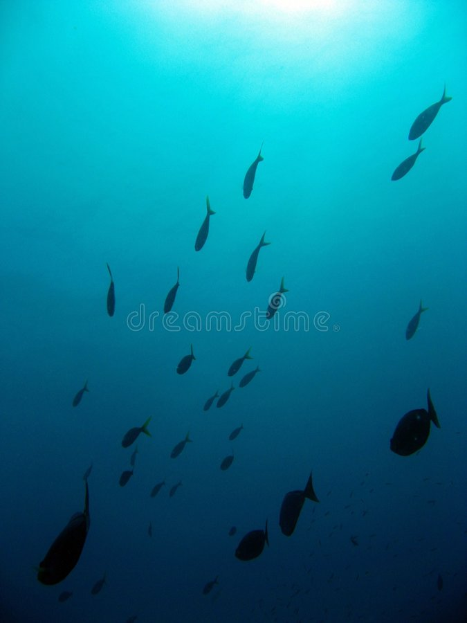 School of fishes royalty free stock images
