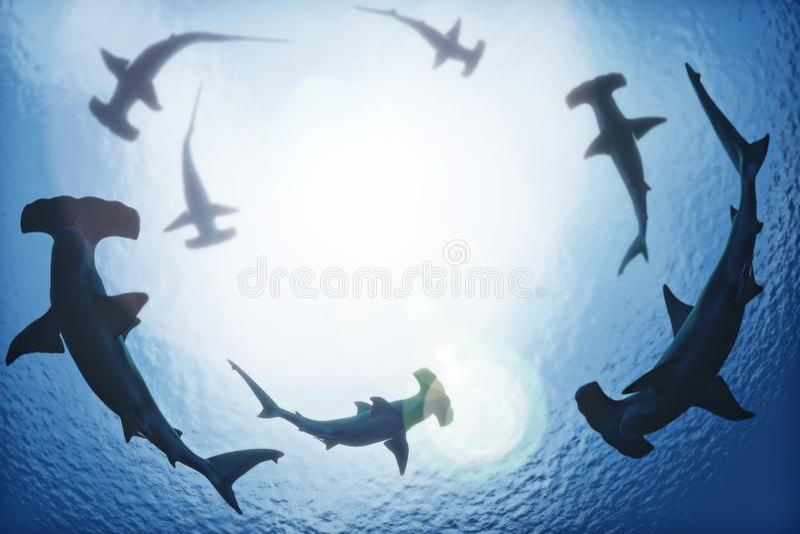 School of hammerhead sharks circling from above the ocean depths. 3d rendering vector illustration