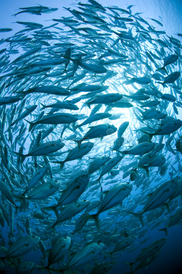 Free School Of Fish Royalty Free Stock Photo - 3018605