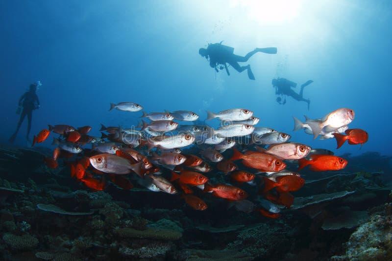 Download School of sanpper stock image. Image of colorful, aquarium - 29372789