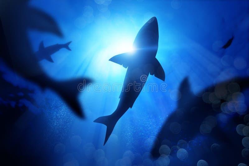 School Of Sharks Under The Waves royalty free illustration