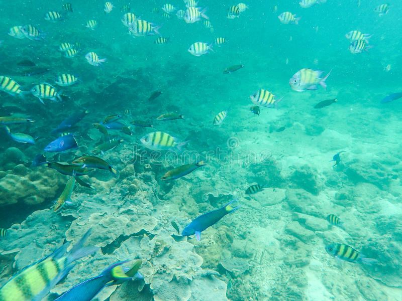 School of Tropical fish stock photo