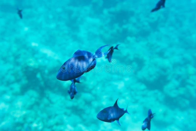 School van blauwe vissen royalty-vrije stock foto