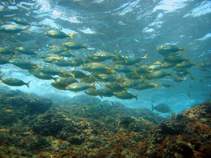 Vissen dichtbij oppervlakte stock afbeeldingen
