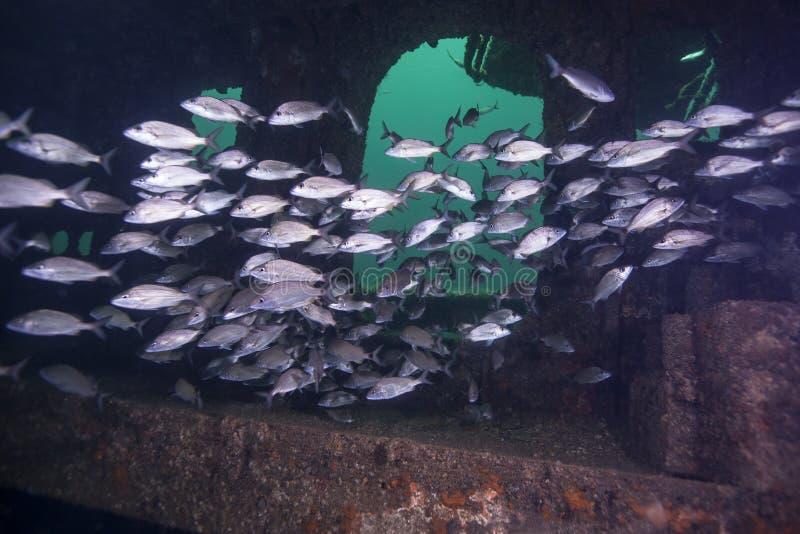 School van Tomtate - binnen Rode Overzees Tug Hull royalty-vrije stock foto's
