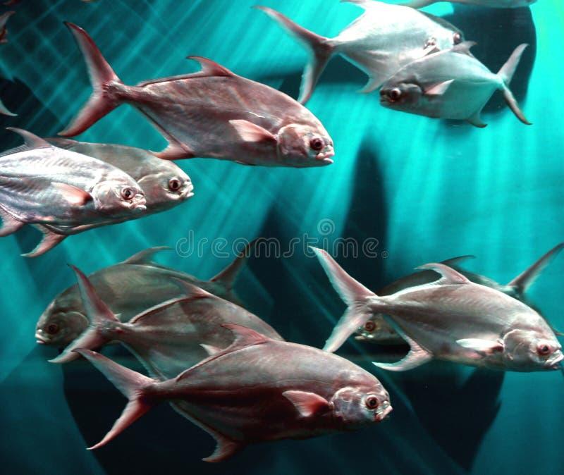 School van Vissen royalty-vrije stock foto's