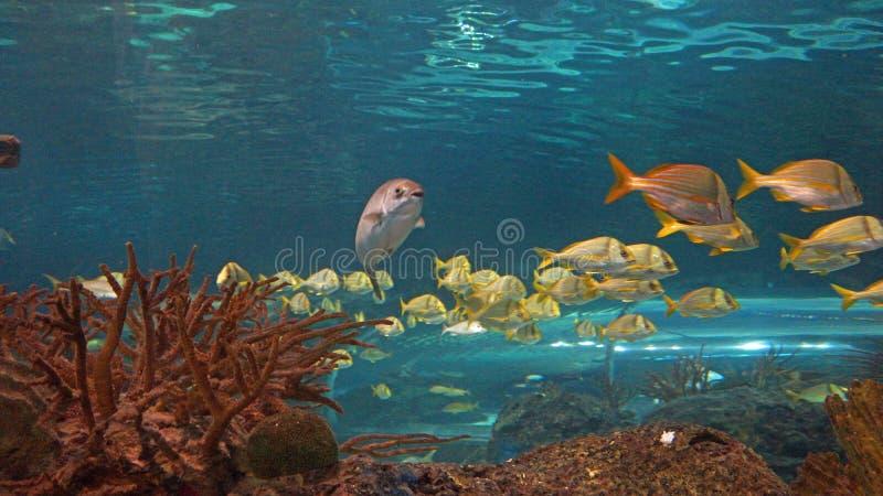 School van vissen stock foto's