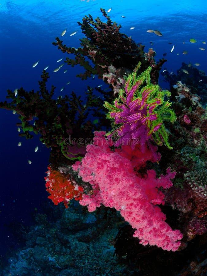 School van vissen in kleurrijk koraal stock afbeelding