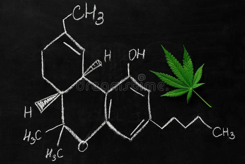 Schoolbord met een blad van marihuana en THC-formule stock foto
