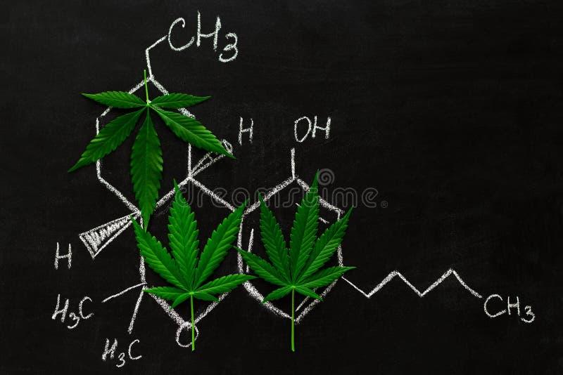 schoolbord met een blad van marihuana en THC-formule stock afbeelding