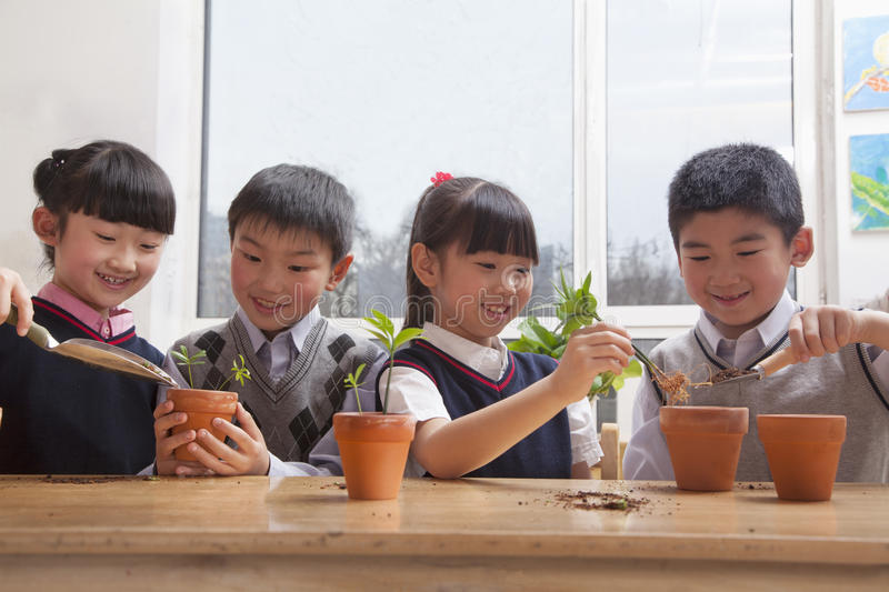 Schoolchildren planting plants into flowerpots in the classroom stock image