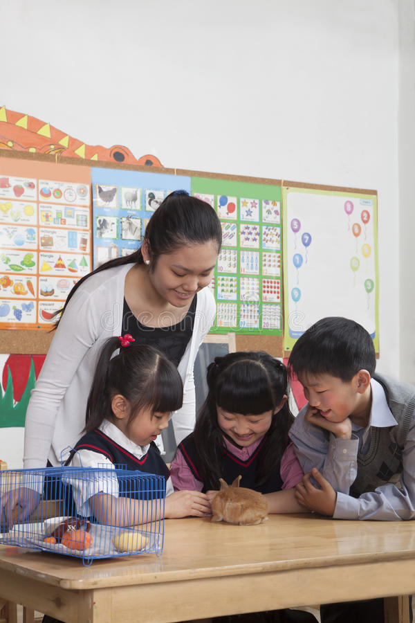 Schoolchildren and teacher playing with pet rabbit in the classroom stock images