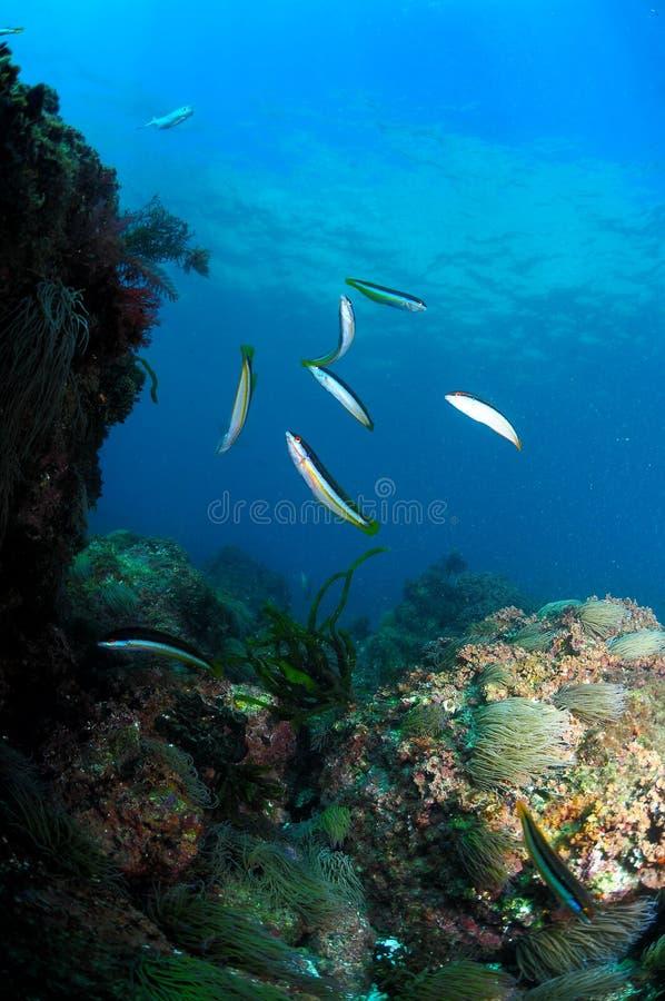 Schoolfish en zon royalty-vrije stock foto