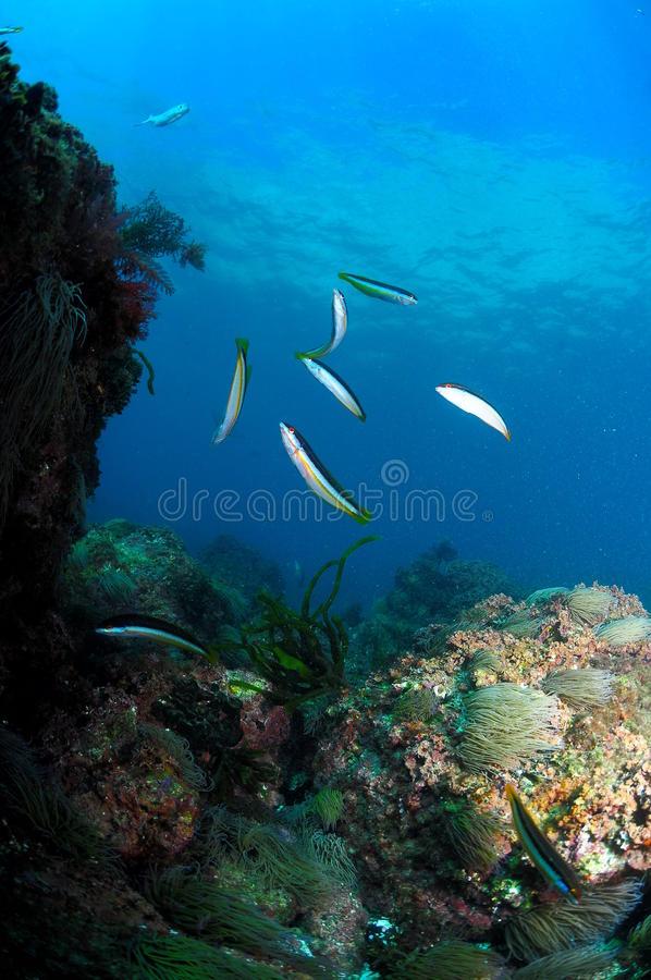 Schoolfish and sun royalty free stock photo