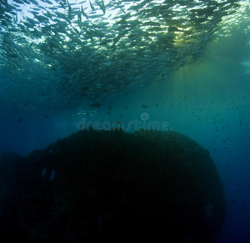 Download Schooling Bigeye stock image. Image of wreck, shallow - 10921169