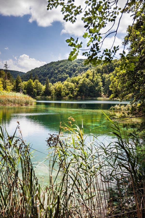 Schoon bosmeer Plitvice, Nationaal Park, Kroatië royalty-vrije stock afbeelding