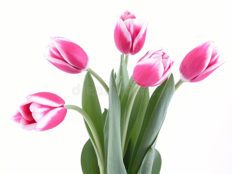 Schoonheid in roze stock afbeelding