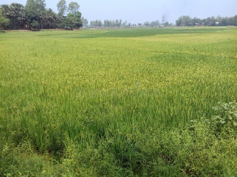 Schoonheid van Bangladesh stock fotografie