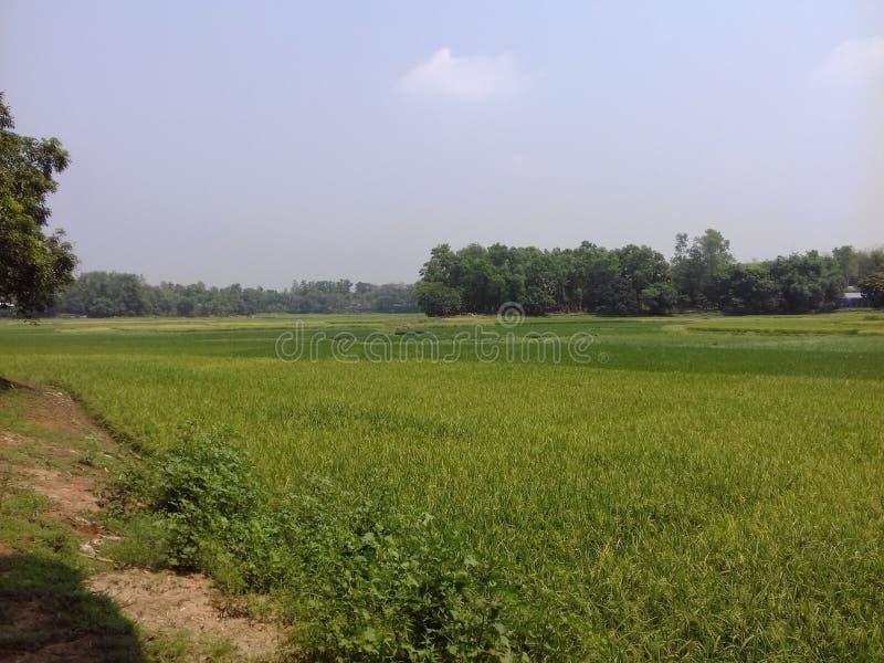 Schoonheid van Bangladesh stock afbeelding