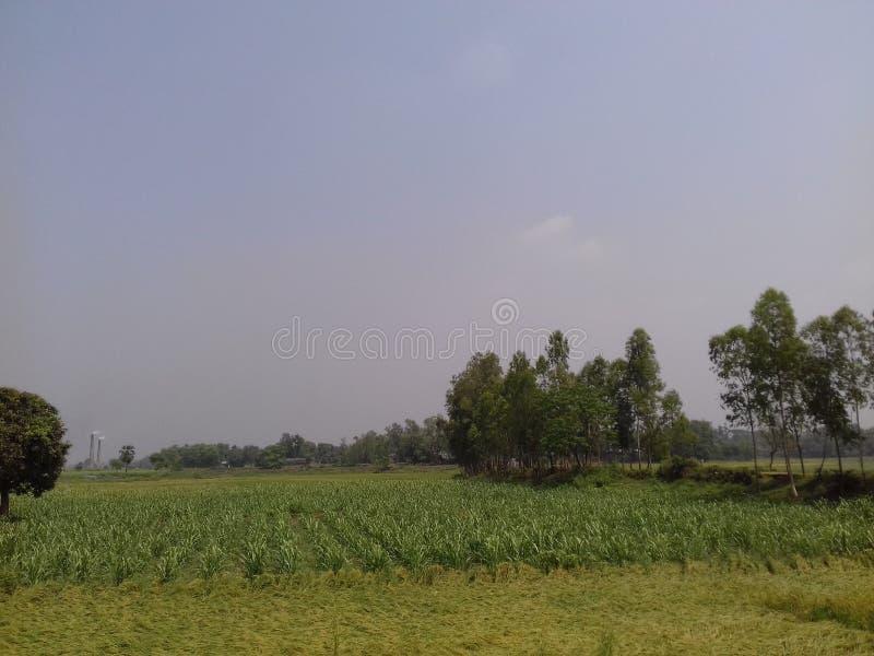 Schoonheid van Bangladesh royalty-vrije stock afbeeldingen