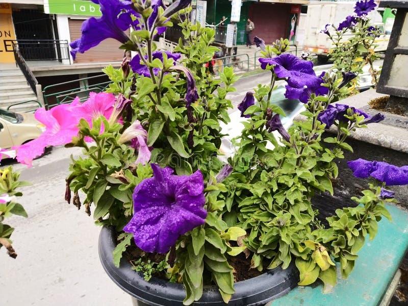 Schoonheid van bloei stock foto's