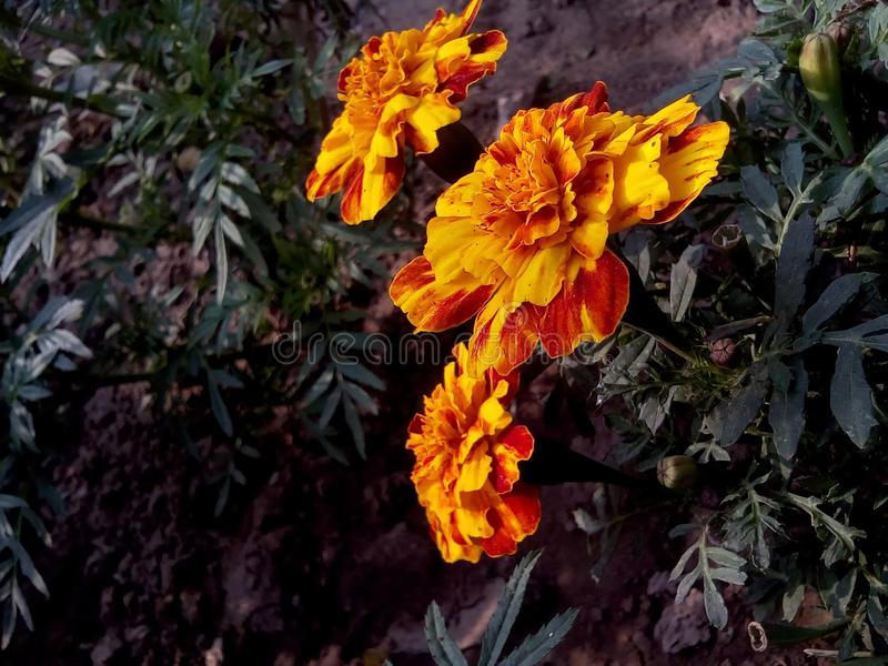 Schoonheid van bloemen stock foto