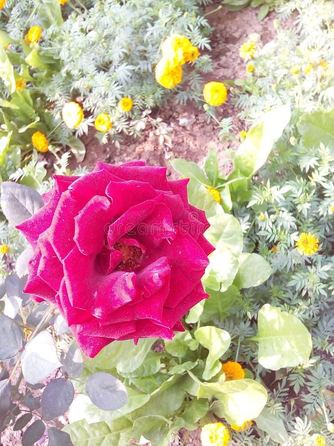 Schoonheid van bloemen royalty-vrije stock fotografie